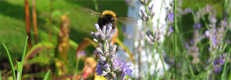 nature at hillcroft